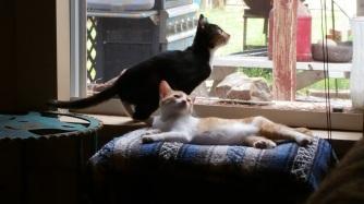 cats8